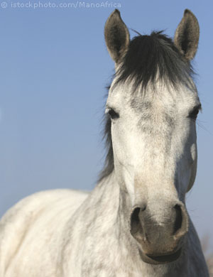 http://www.four-legged-friends.com/images/horses/falabella-2.jpg